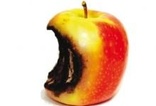 Apple iNoia.